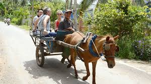 Mekong Delta Tour 1 Day From Ho Chi Minh, Private Car Transfers