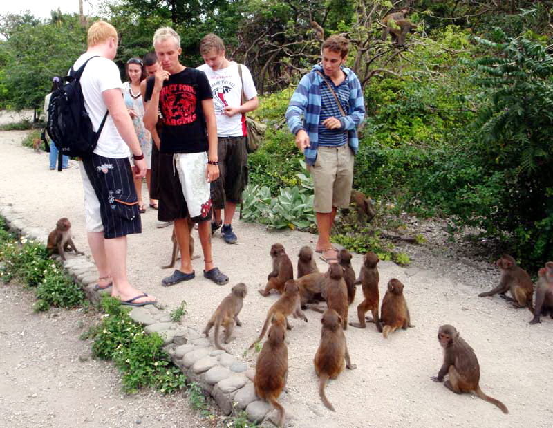 Private Car Transfers Ho Chi Minh To Can Gio Monkey Island Tours