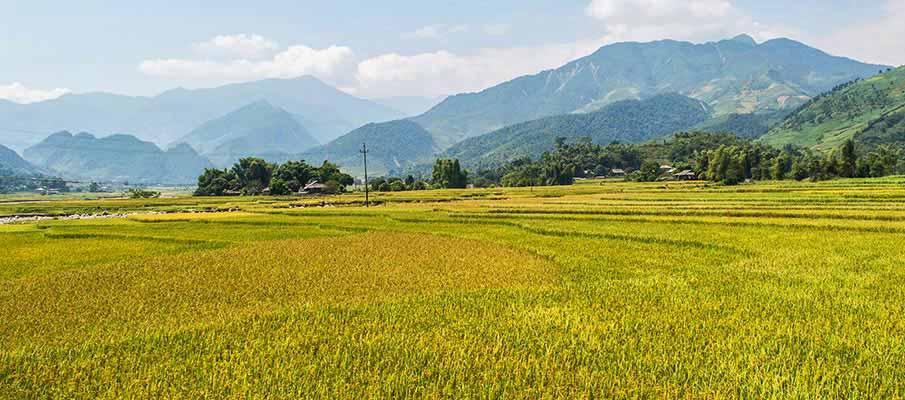 Tú Lệ Rice Field, Van Chan district, Yen Bai
