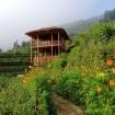 The Top Homestays In Mu Cang Chai district, Yen Bai province
