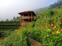 The Top Homestays In Mu Cang Chai district, Yen Bai province